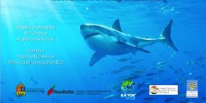 Experto en Tiburones ofrecerá conferencia en el planetario de Cancún KA' YOK'