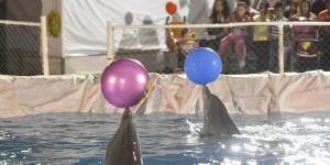 Diversión en el delfinario en la Feria Tabasco 2014