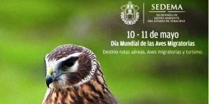 Veracruz, importante corredor migratorio para millones de aves, mariposas y libélulas: SEDEMA