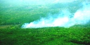 Controlan incendio en Chemuyil Quintana Roo