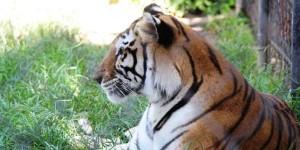 Mérida busca ampliar con intercambios la variedad de la fauna de sus dos zoológicos