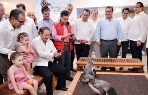 Es Veracruz, ejemplo de cuidado y preservación de la vida marina el Pingüinario: Javier Duarte
