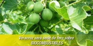 Veracruz será sede de foro sobre biocombustibles, anuncia Inverbio