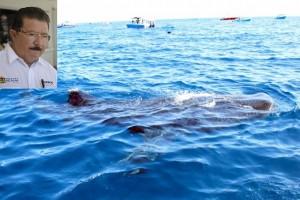 Exitosa temporada de avistamiento del tiburón ballena en aguas de Quintana Roo
