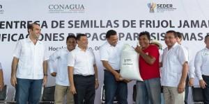 Continúan en Yucatán las entregas de frijol Jamapa
