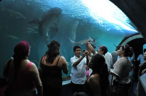 2014, un gran año para el turismo veracruzano: Harry Grappa