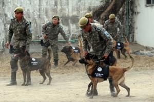 Agrupamiento Canino de la Policía Estatal garantiza seguridad en Carnaval Veracruz 2015