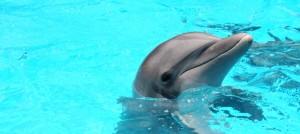 Carece Dolphin Discovery autorización de impacto ambiental para operar delfinario: PROFEPA