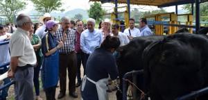 Pasará Veracruz a calidad Premium en ganadería: SEDARPA