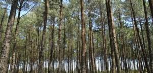 San Juan del Monte, uno de los bosques mejor conservados en Veracruz