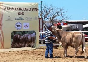 Continúa la VIII Exposición Nacional de Ganado Suiz-Bú en Expo Coatza 2015