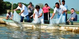 Libera Bertruy 100 mil crías de mojarra tilapia