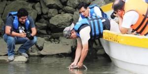 ZooMAT Chiapas libera crías de cocodrilos en el río Grijalva