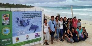 Vigilan 13 playas de Quintana Roo para proteger nidos de Tortugas Marinas