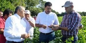 Supervisan plantaciones de soya al sur de Yucatán