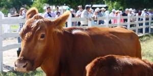 Positivo aprovechamiento de apoyos ganaderos en Expo Feria Tizimín 2016