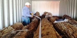 Asegura PROFEPA 15M3 de madera que pretendía ser exportada ilegalmente hacia Japón, en Yucatán