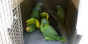Coadyuva PROFEPA en detención de personas por posesión ilegal de fauna silvestre en Tabasco