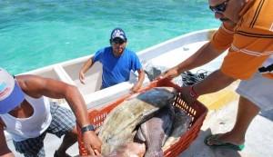 Inversión de 11 MDP al sector pesquero y Acuícola de Quintana Roo en 2015: SEDE