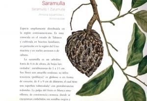 """Presentarán los """"Colores de la selva, fauna y flora de Tabasco"""" en la UJAT"""