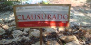Clausura PROFEPA proyecto habitacional tras remociones de mangle rojo en Chetumal Quintana Roo