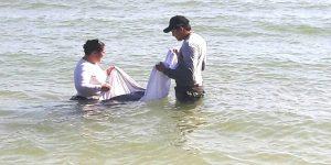 Atiende PROFEPA varamiento de cachalote Enano (Kogia Sima) en Telchac Puerto, Yucatán