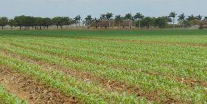 Compañía Agrícola Valle del Sur, registra cosecha histórica de hortalizas para exportación