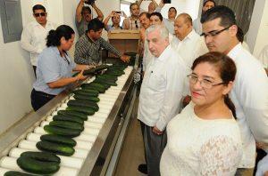 Inaugura Núñez invernadero para exportar pepino a EU y Canadá; se invierten 50 mdp