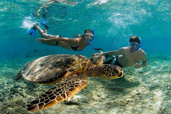 Akumal nado con tortugas