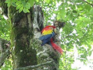 Palenque Chiapas celebro su 35 aniversario como parque Nacional