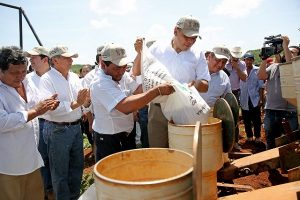 Impulso a la producción de granos en el sur de Yucatán