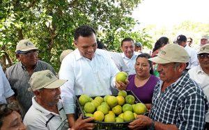 Respaldo a la producción de cítricos en Yucatán