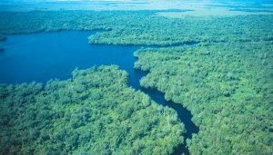 Celebra la Reserva de la Biósfera Pantanos de Centla, Tabasco 24 aniversario
