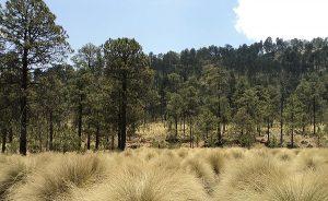 Pico de Tancítaro: cumple 15 años como Área de Protección de Flora y Fauna