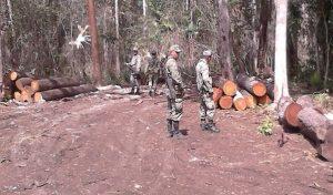 Asegura PROFEPA 86 metros cúbicos de madera en rollo producto de tala ilegal en Campeche