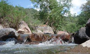 Parque Nacional El Potosí Cañada Grande, un museo vivo de flora y fauna