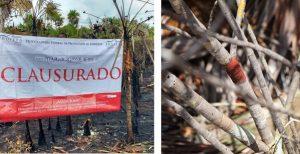 Determina PROFEPA incendio en la Isla de Holbox fue provocado; clausura 87 hectáreas siniestradas