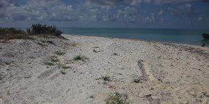 Confirma PROFEPA violaciones legales y administrativas en Parque Nacional Arrecife Alacranes