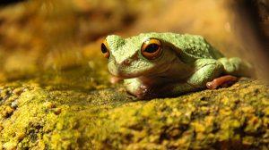 Chiapas: región rica en biodiversidad de anfibios y reptiles
