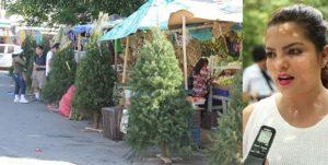 El Ayuntamiento de Benito Juárez realizara campaña de acopio de árboles de navidad