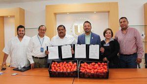 Impulsarán transformación y procesamiento del tomate rojo en la UPChiapas