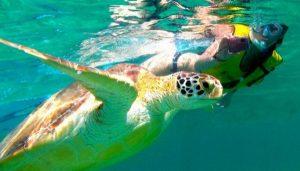 Suspensión temporal de nado con tortugas en bahía de Akumal: PROFEPA