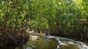 Reconoce CiiMarGOMC proyecto de rescate de manglar en Ciudad del Carmen