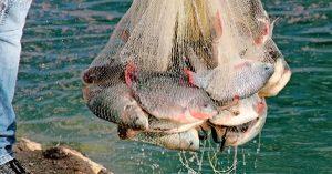 Pescados y mariscos, más allá de la certificación