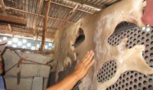 Asegura PROFEPA tres pieles de Venado de presunta caza furtiva en Yucatán