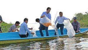 Beneficia Centro a pescadores de Ismate y Chilapilla con 15 mil crías de tilapia