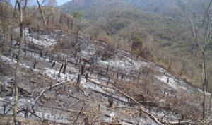Impone multa PROFEPA a particular por provocar incendio en 173 hectáreas de terrenos en Colima