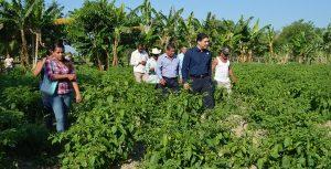 Trabaja SDET en proyecto para industrializar chile habanero