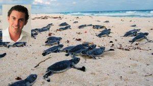 Cumplimos con la protección a las Tortugas Marinas: Remberto Estrada