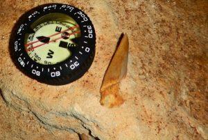 Hallan fósil de tiburón prehistórico en Yucatán